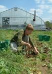 Julia transplanting sorrel