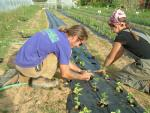 Trey and Mary planting mint
