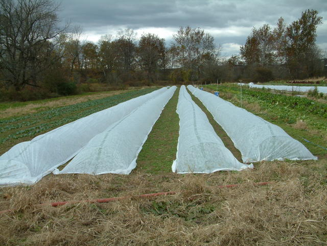remay covered fall crops