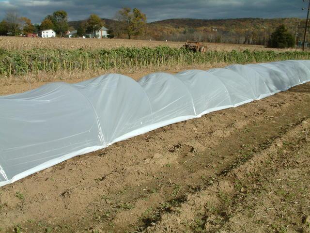 spring crops under 4 mil plastic