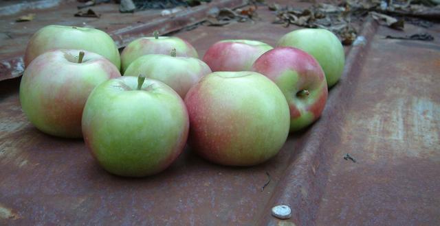Apple, McIntosh