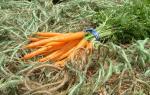 Carrots, Minicor