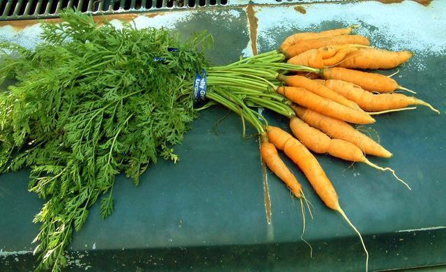 Carrots, Nelson