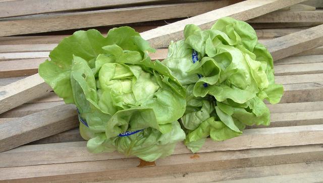 Lettuce, Nancy