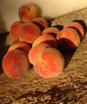 Peach, Derby