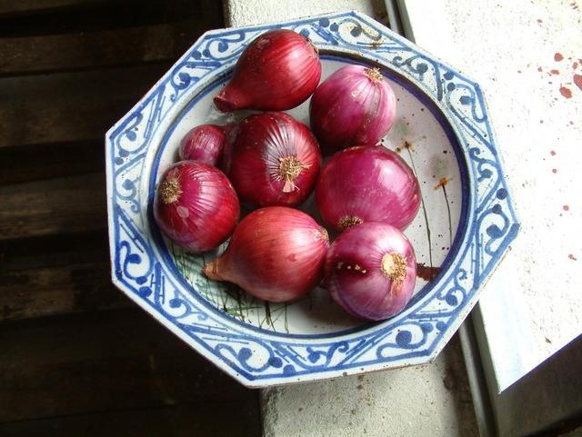 Onion, Red Burgermaster