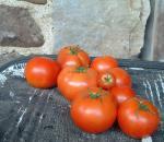 Tomato, Early Cascade