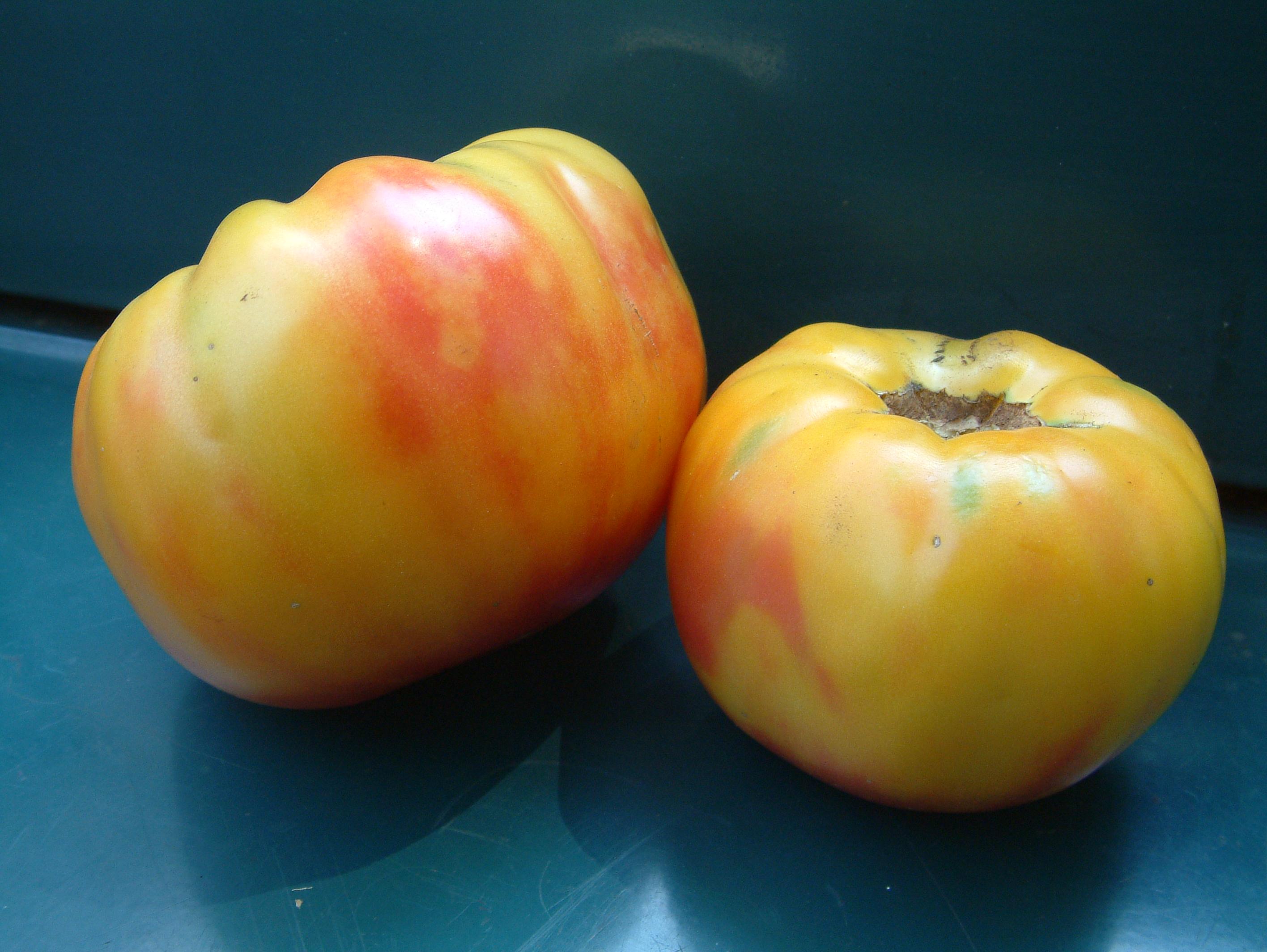 Striped German Tomato